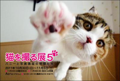 2011猫を撮る展.jpg