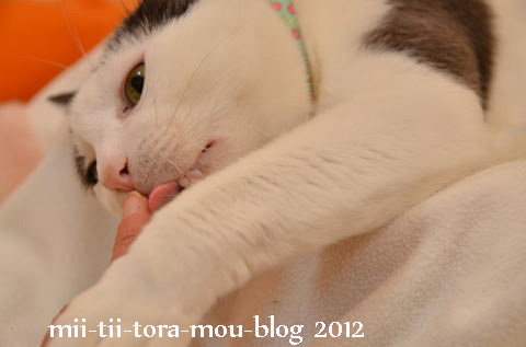 20120304e.jpg