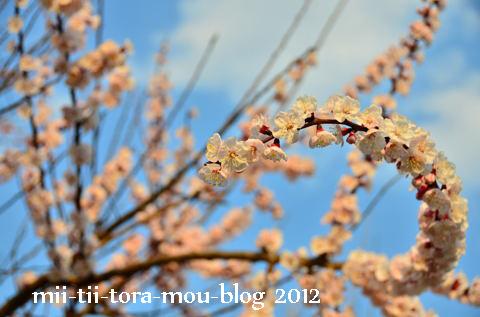20120328e.jpg