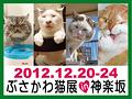 2012ぶさかわ猫展バナー.jpg