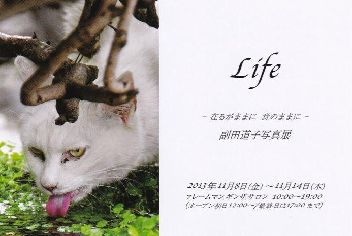 2013そえにゃんさんDM.jpg