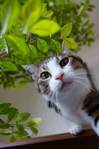 2013cats41+.jpg