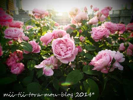 20140510e.jpg