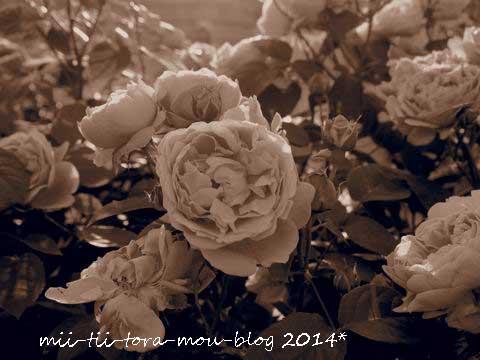 20140510g.jpg