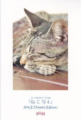 2016ねこ写4.jpg