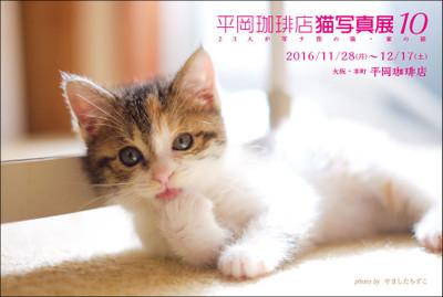 hiraco10_dmura_2.jpg
