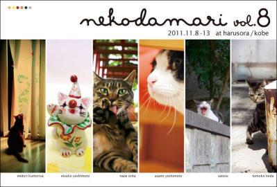2011猫だまさん.jpg