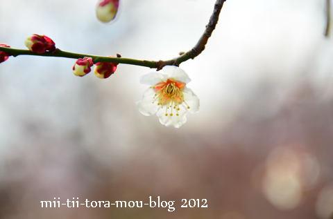 20120301e.jpg