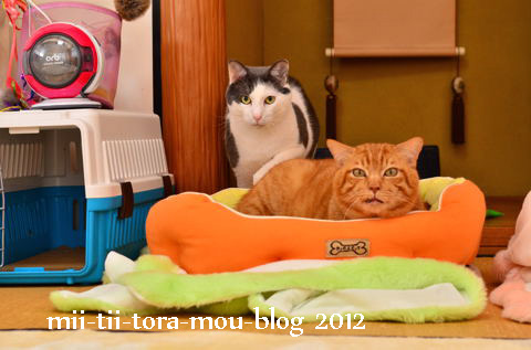 20120310.jpg