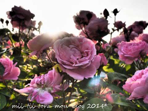 20140510h.jpg
