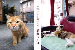 猫六DM小.jpg