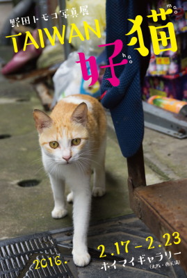 TAIWAN-haomao_DM.jpg